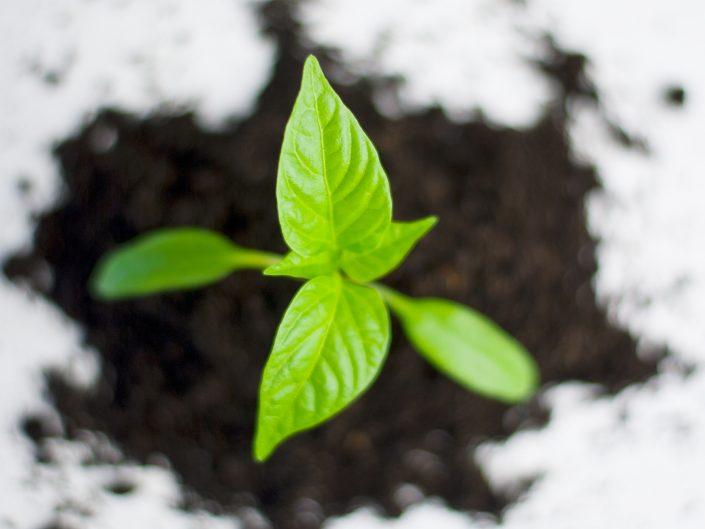 Energie rinnovabili Bioedilizia